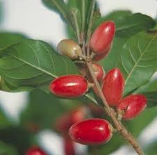 frutto miracoloso